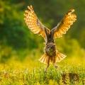 上海以外的鸟