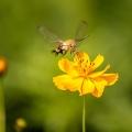 昆虫微距摄影