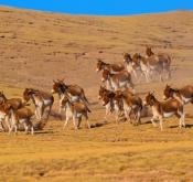 点射:勇闯无人区—世界第三极野生动物