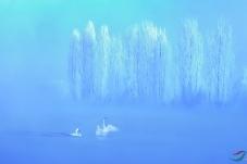 梦幻天鹅湖