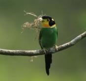 5月31日弄岗鸟类拍摄活动(特价)