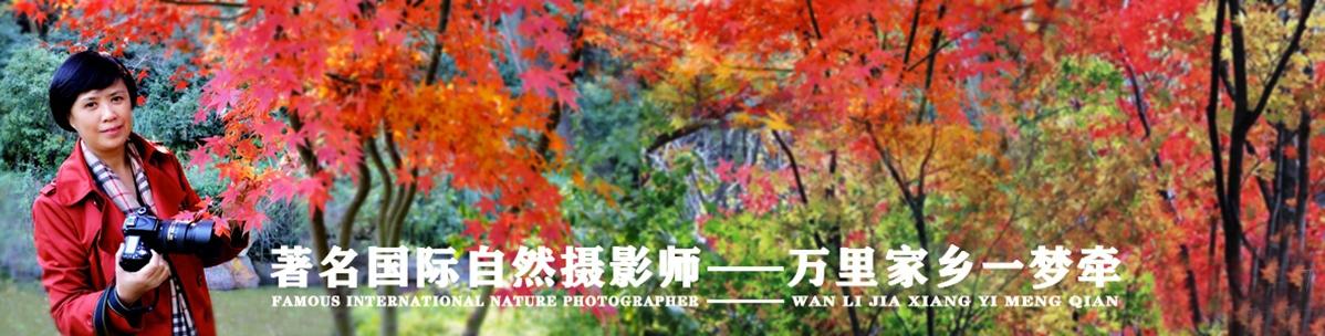 008【国际自然摄影师】万里家乡一梦牵:心
