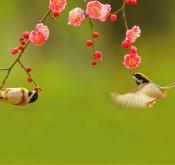 试论鸟友圈文化及建立