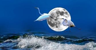 海上生明月