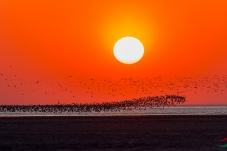 在鸟网年会之际,祝鸟网红红火火、如日中天