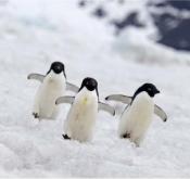 11月跟着WPY获奖摄影大师来到南极半岛深度