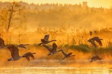 晨曦中起飞---乘年会的东风,祝鸟网明天更