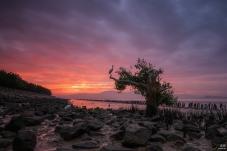 拍摄与深圳湾公园