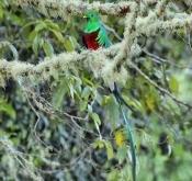 2019年8月哥斯达黎加鸟类生态摄影之旅