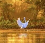1月5日斯里兰卡鸟类拍摄活动