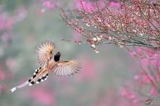 【春分】春色满园,鸟语花香