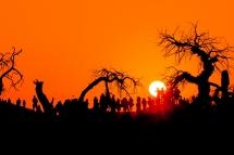 怪树林日落怪景像