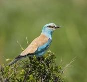 5月29日北疆春季拍鸟活动