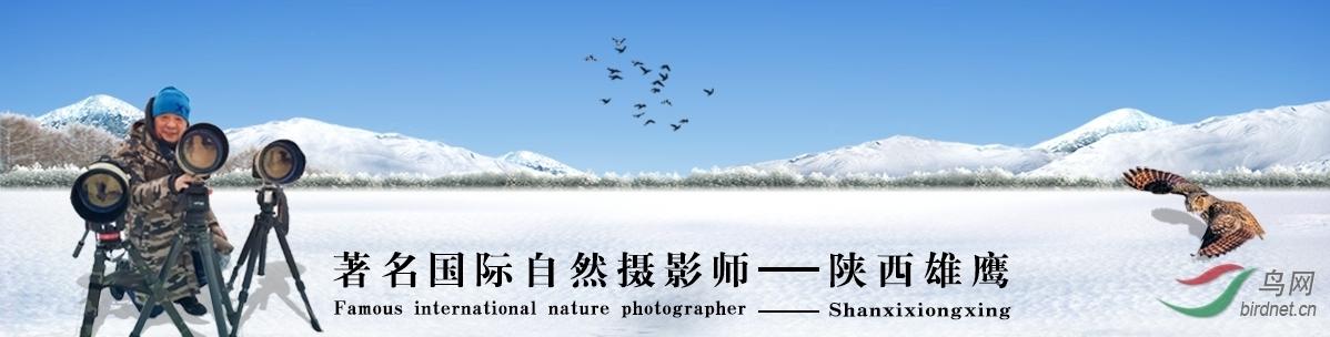 007【国际自然摄影师】陕西雄鹰:拍鸟护鸟