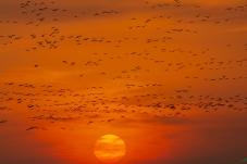 《飞向太阳》