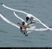 回顾野鸟摄影十三年,与鸟网同龄