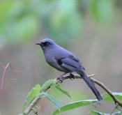鸟类摄影作品的知识产权保护