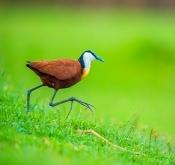 2019年7月19日肯尼亚鸟类拍摄活动