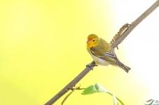 乐山乐水乐拍鸟