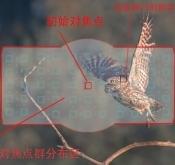 Nikon D850 野生动物摄影实战测评(二)