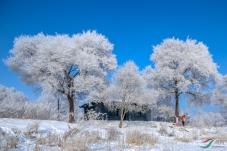 冬季到东北来看雪