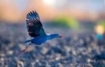 草长(紫水)鸡飞二月天