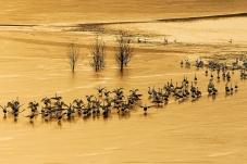 黄河上的狂欢