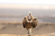 前来祝贺——再次祝贺鸟网年会取得圆满成功