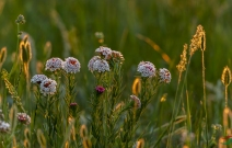 醉草原——六月花絮篇