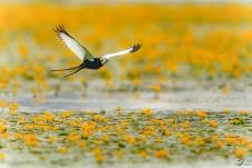 飞跃黄地毯