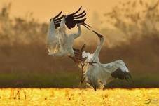 白鹤争斗系列之五式----黯然消魂掌