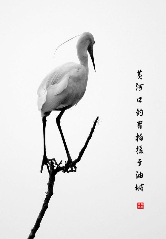 简单的动物黑白画