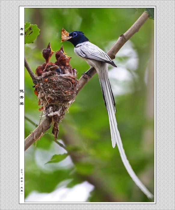 2010年三门峡市野生动物保护摄影学会鸟类摄影大赛展