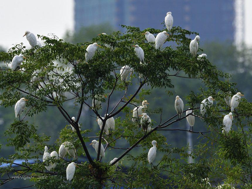 树上的鸟儿