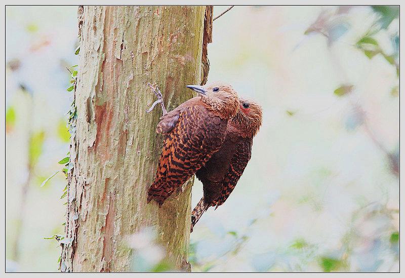 啄木鸟�zee�ab:e