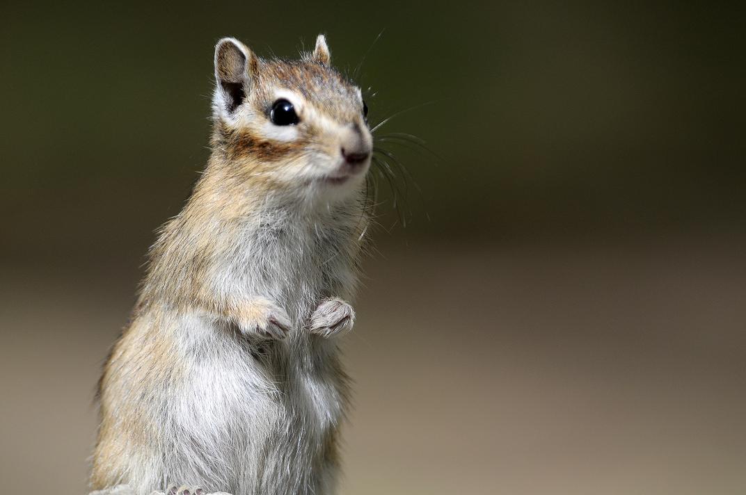 可爱的小松鼠 - 野生动物