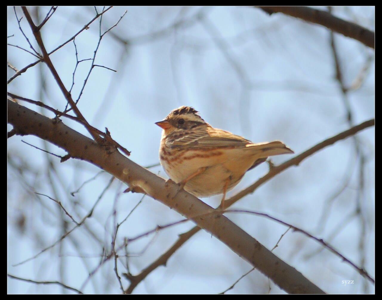 春天的鸟 - 辽宁版 liaoning