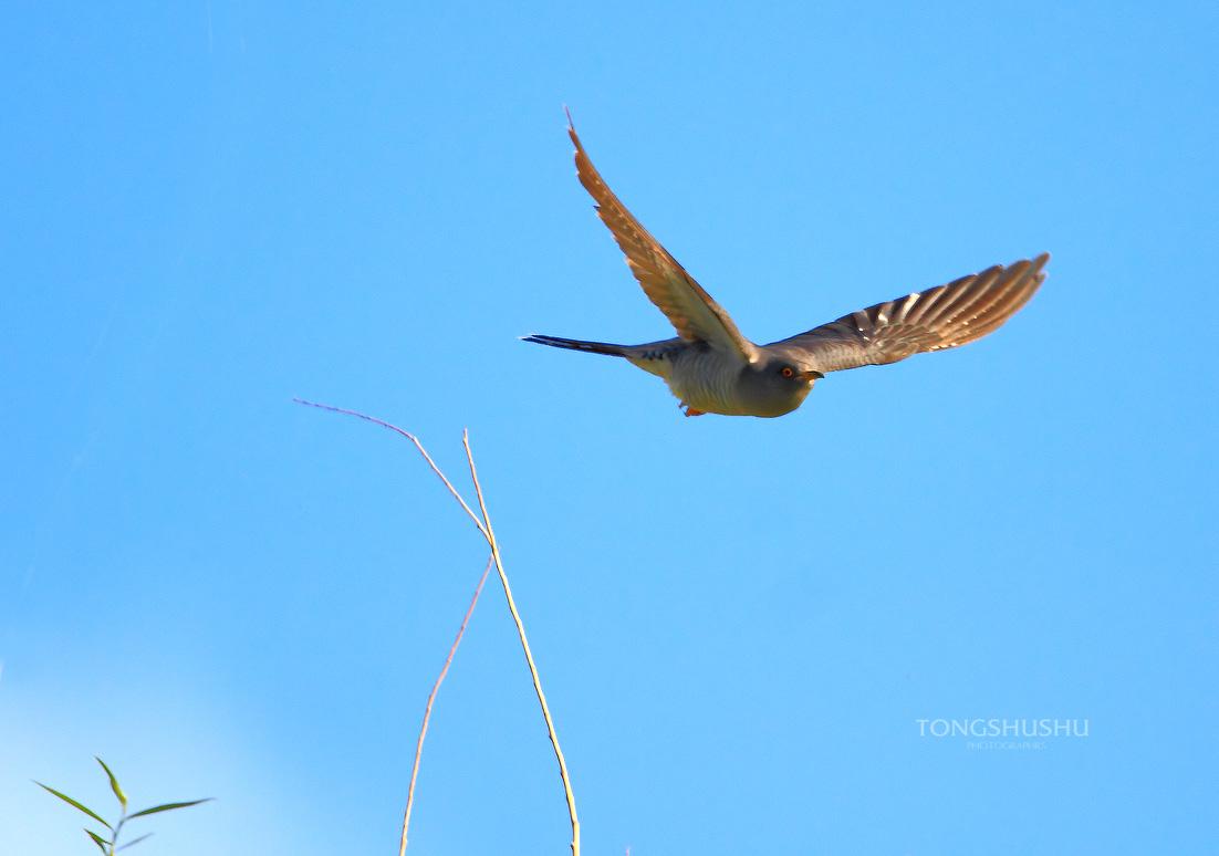 鸟儿在天空飞翔!