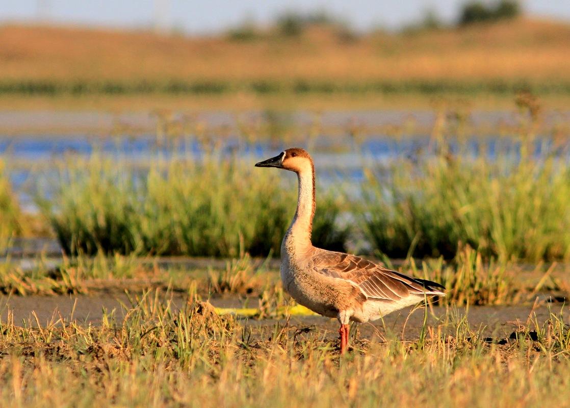 动物 鸟 鸟类 摄影