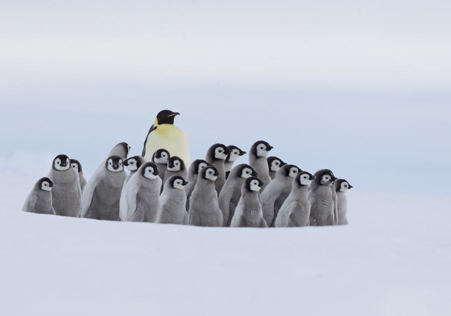 贺岁帖(四集):与帝企鹅相伴的日子