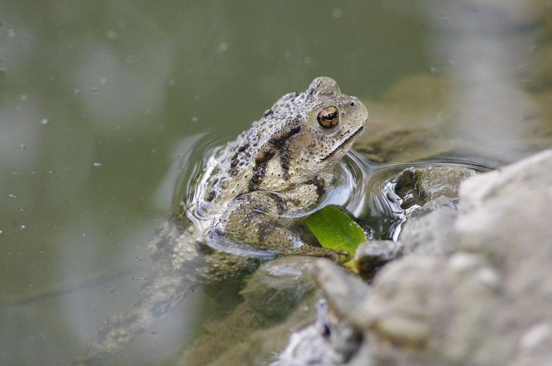 青蛙和蛤蟆 树医生 小斑马