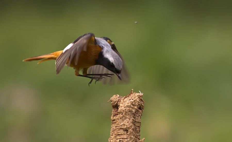 最近武汉东湖的明星鸟