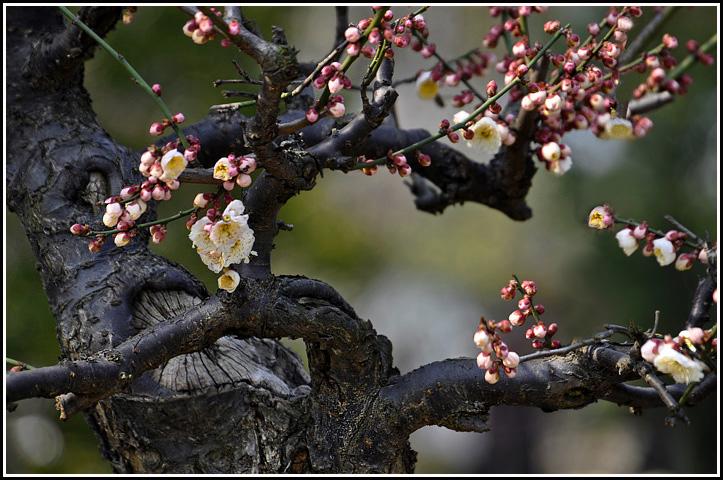 幼儿园布置环境卡纸制作的梅花树干