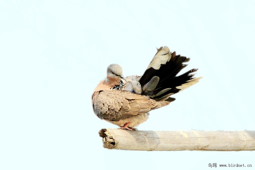 寒门迂叟 - 我的专辑 鸟网