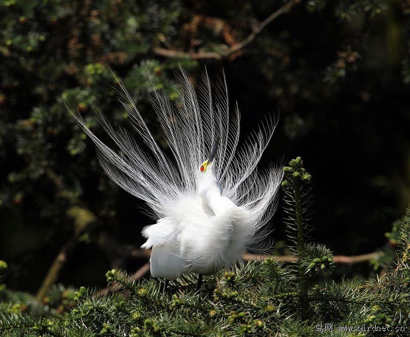 免费撸撸鸟