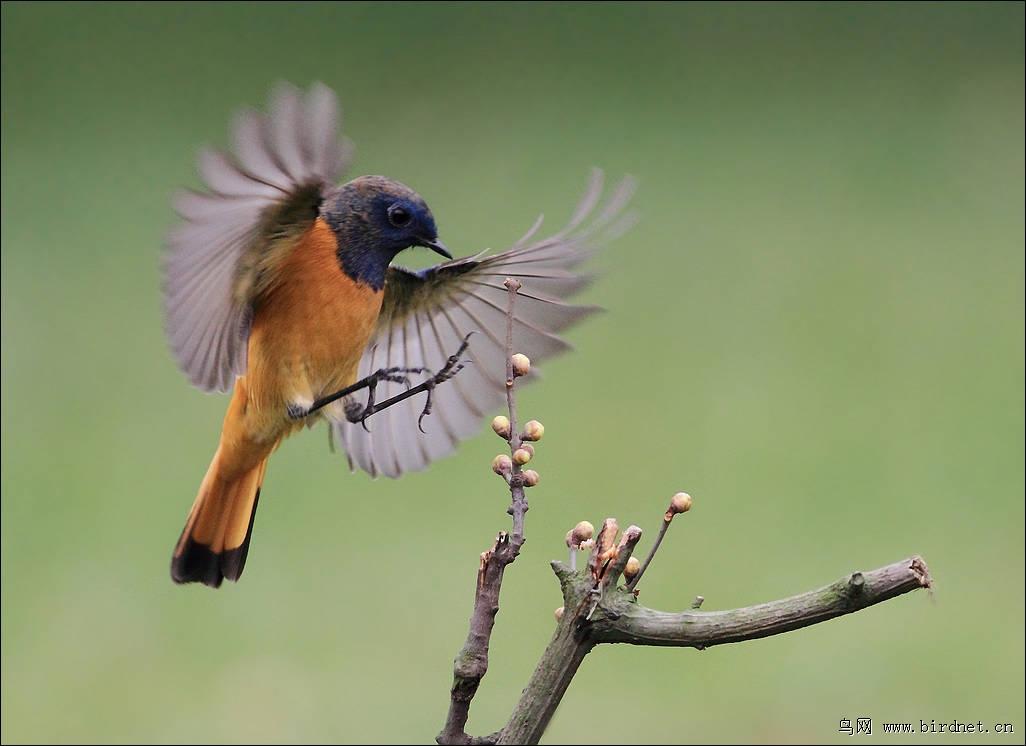 非洲帅哥晨勃鸟图片