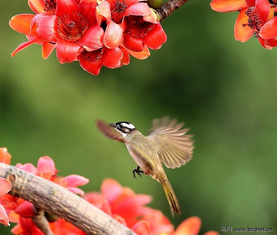 描写春天的动物的诗句