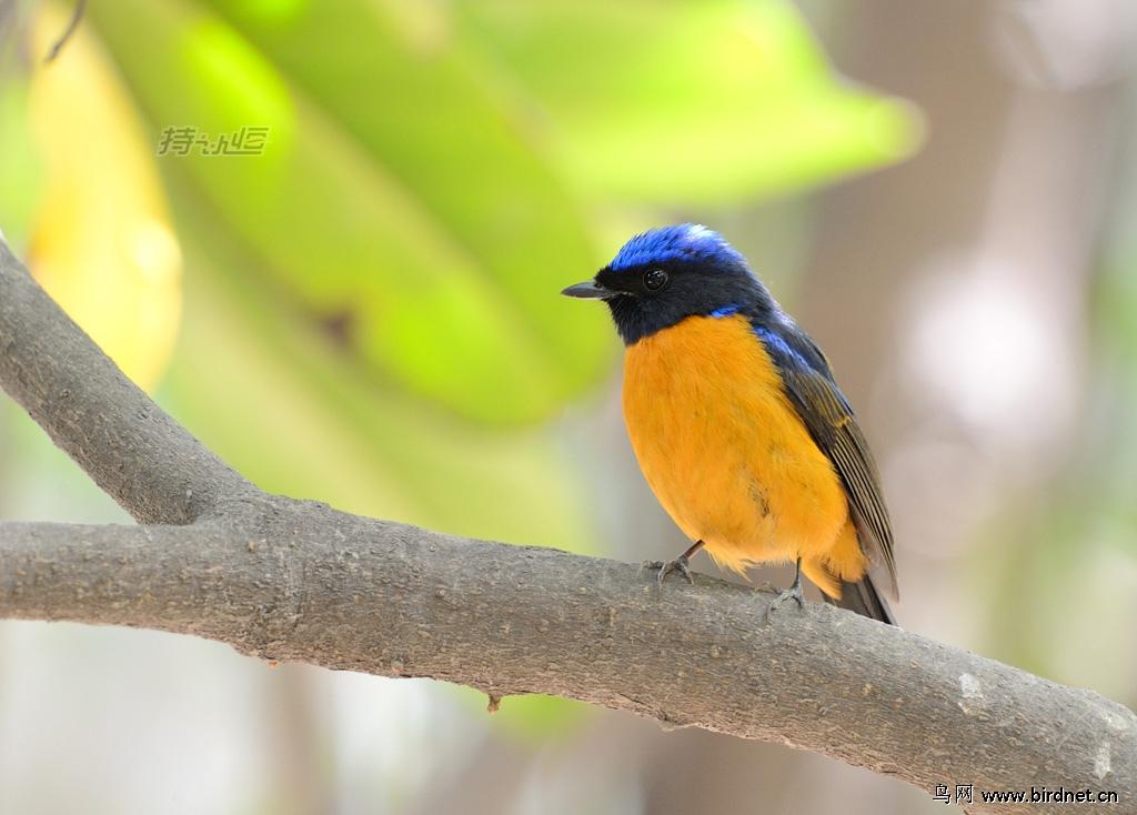 春天鸟儿迁徙的季节到了