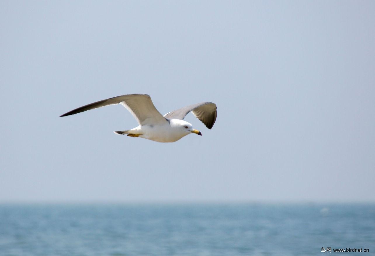 动物 鸟 鸟类 1284