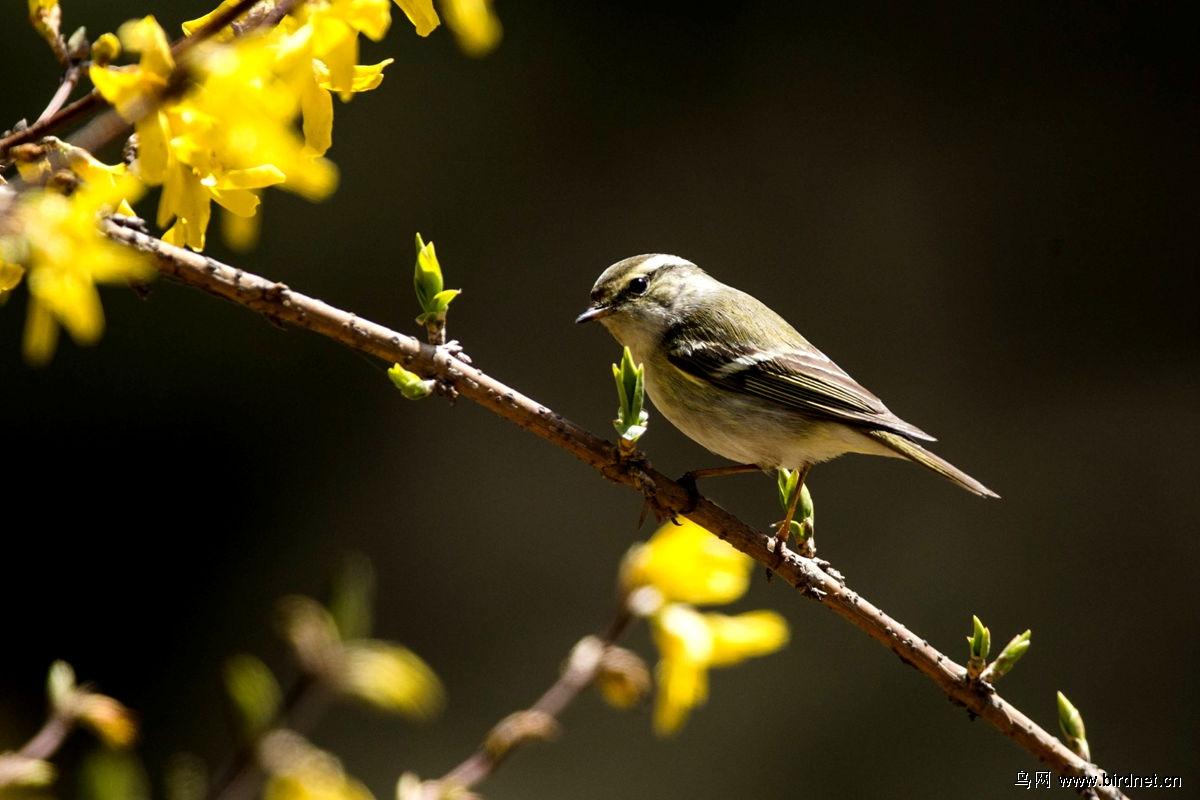 小妖鸟也有春天 狂上加狂